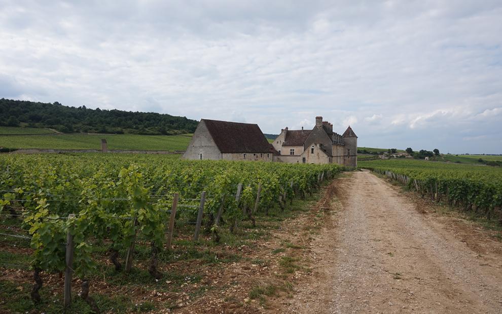 Borgonha terroir