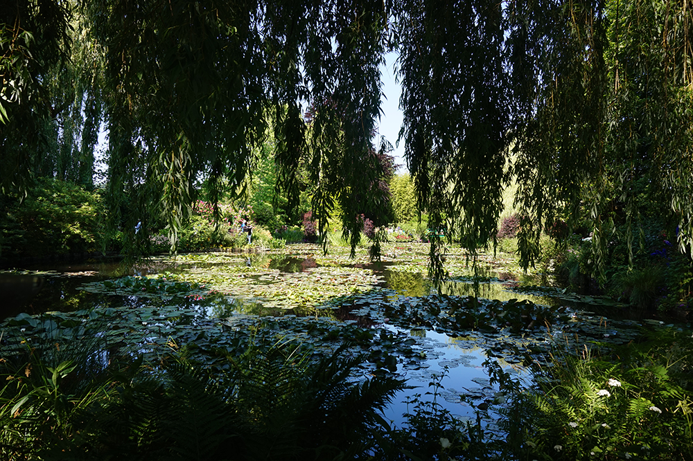 Monet jardim aquatico
