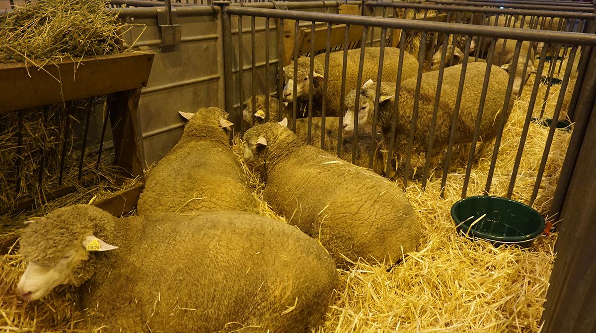 Salao da agricultura animais