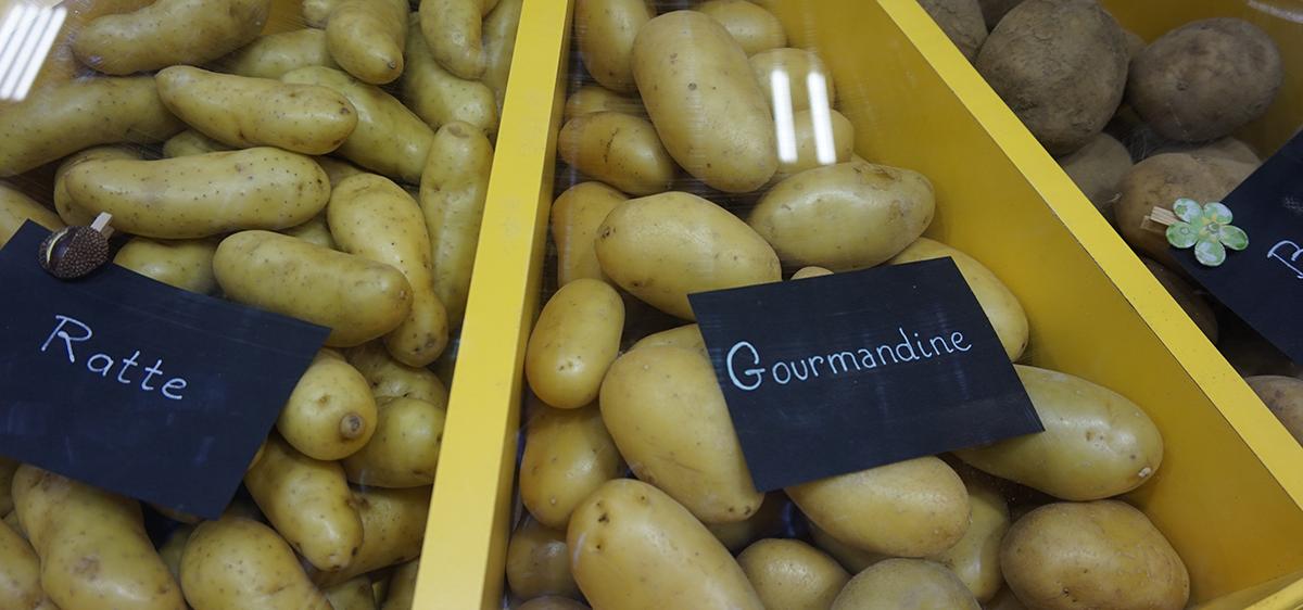 Salao da agricultura batatas