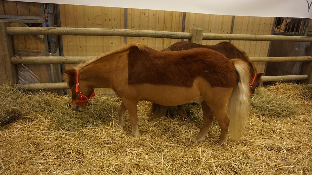 Salao da agricultura equinos