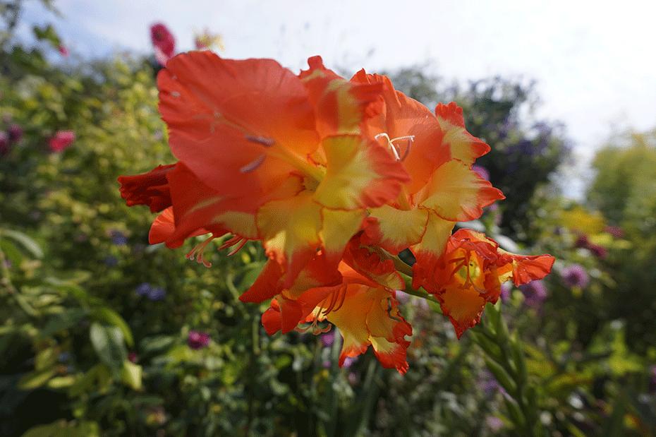 flores-monet-6