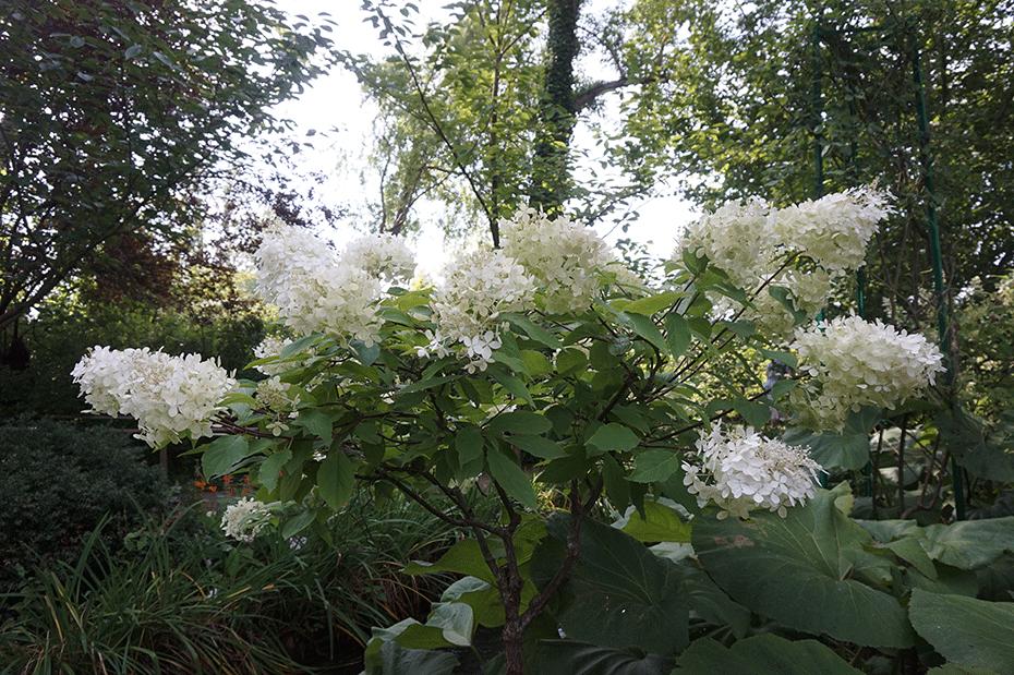 flores-monet-8