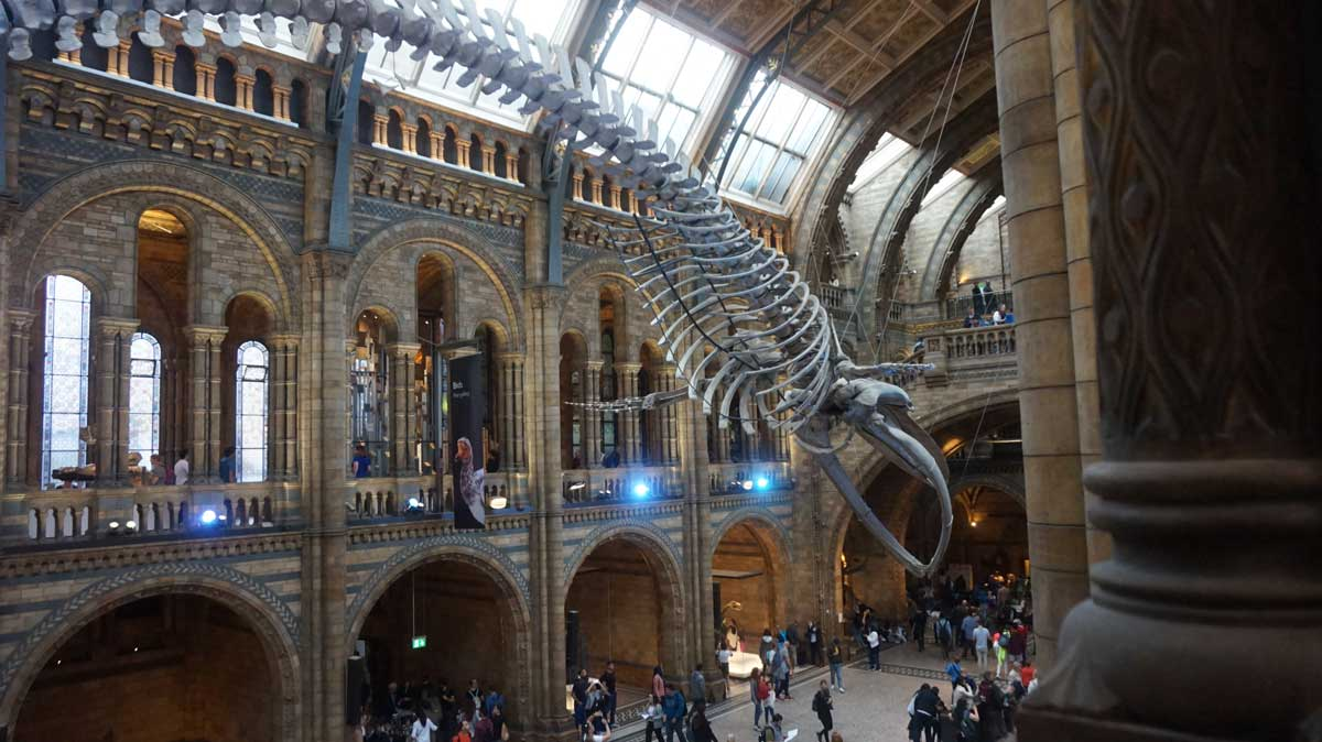 Museu de Historia Natural de Londres