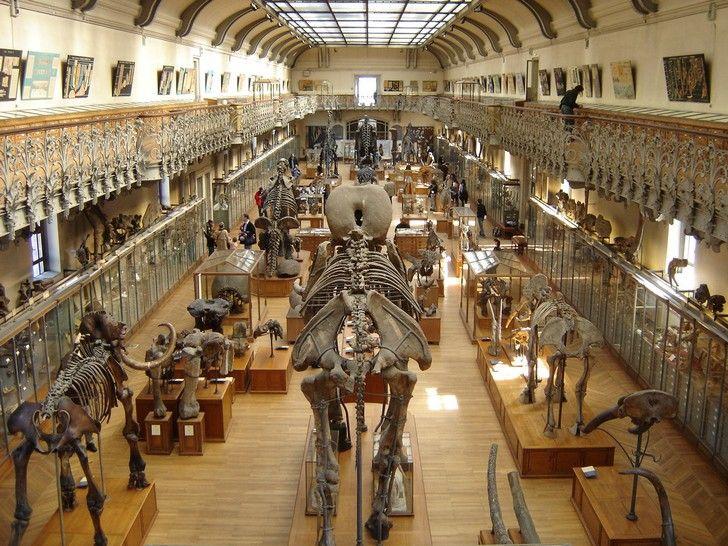 museu de historia natural Paris